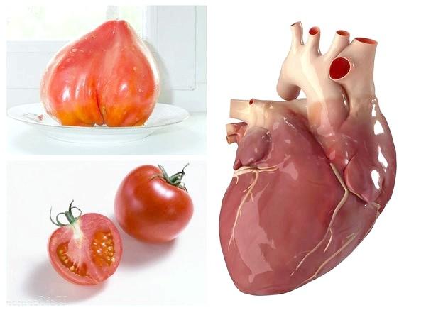 Помідор або томат звичайний і серце