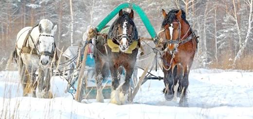 Тренування коней ваговозів, equestrian.ru