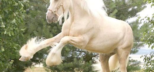 Фотографія коні шайрської породи, kn3.net