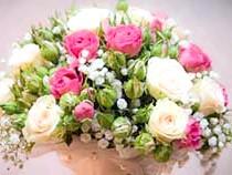 Фото - Фото троянди