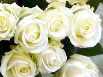 'Avalanche' rose