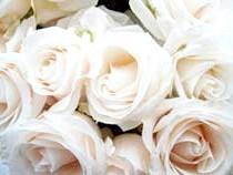Фото білі троянди