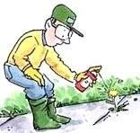 Фото - Гербіциди та інсектициди в саду - користь чи шкода