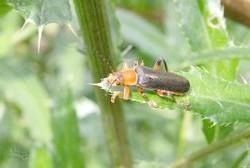 Як залучити в сад корисних комах