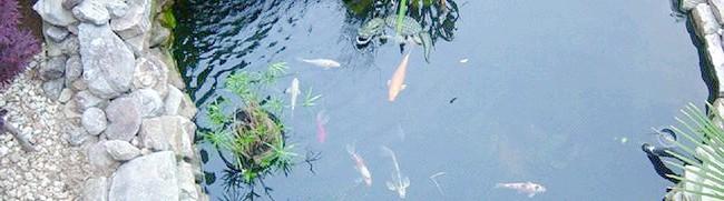 Фото - Як зробити ставок для розведення риби всього за 5-6 тисяч рублів і за 2-3 дні