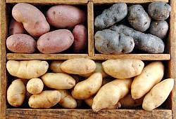 Фото - Як виростити хороший і великий урожай картоплі