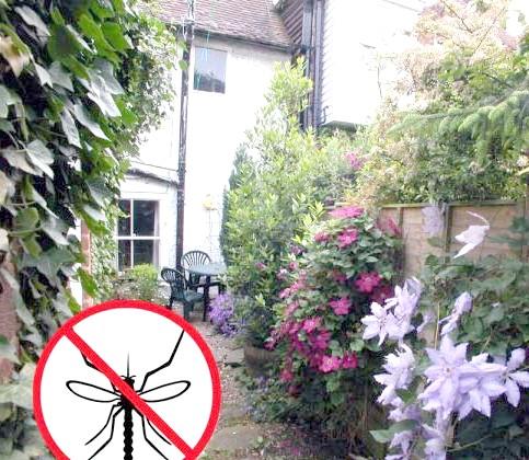 Фото - Як захиститися від комарів