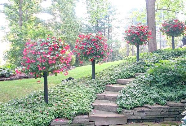Контейнерний сад