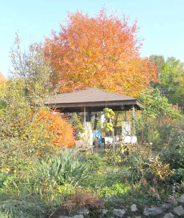 Фото - Фарби осіннього саду