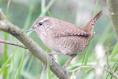 Фото - Комахоїдні птахи - найкращі захисники саду та городу