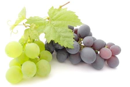 Фото - Посадка винограду