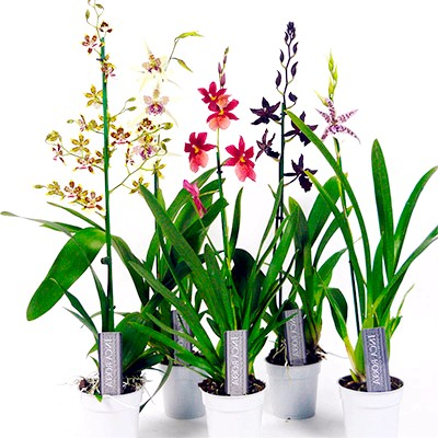 Після покупки орхідеї
