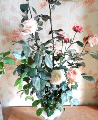Фото - Розмноження троянд живцями