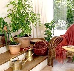 Фото - Рейтинг популярних кімнатних рослин