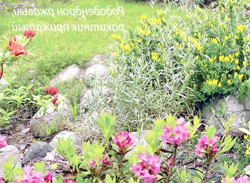 Фото - Сади россии: сад на карельському перешийку