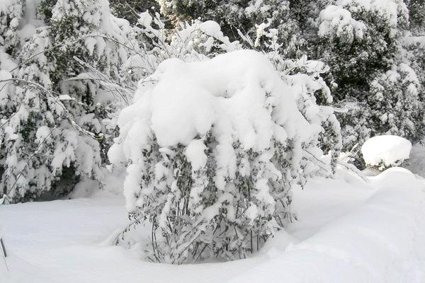 Фото - Сезонні роботи в саду і городі: перший тиждень січня