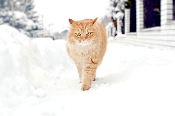 Фото - Скільки снігу нам потрібно?