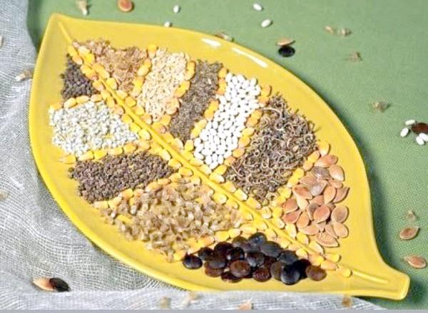 Фото - Терміни зберігання та посіву, умови пророщування насіння овочевих культур