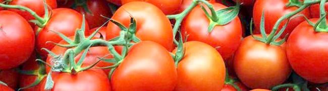 Фото - Томат сніжний барс і інші найсмачніші, врожайні та стійкі сорти помідор