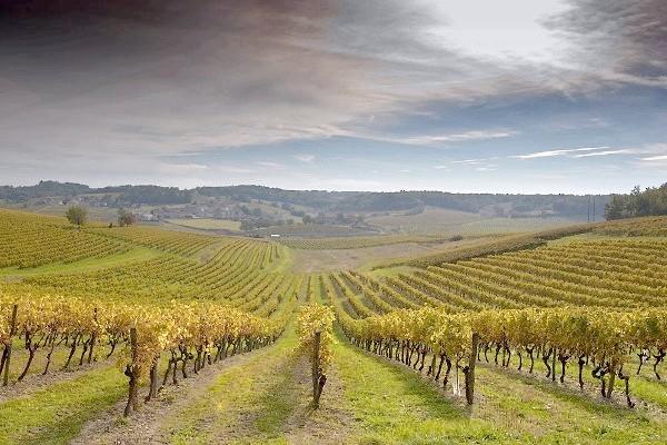 Фото - Догляд за виноградом