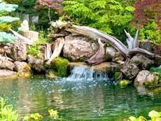 Фото - Водойма з рослинами