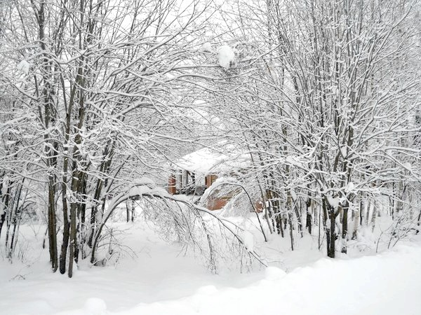 Деревця гнуться під снігом