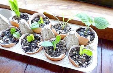 ємності для вирощування розсади