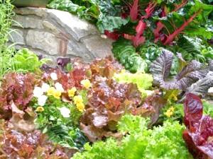 Фото - Вирощування овочів на городі