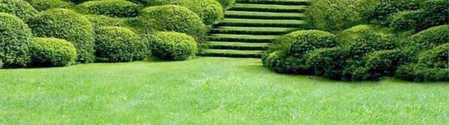 Фото - Зелений річний килим забезпечить посадка газону восени